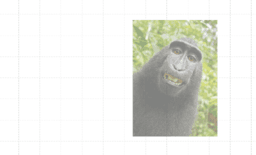 Symmetrie an Tier-Bildern