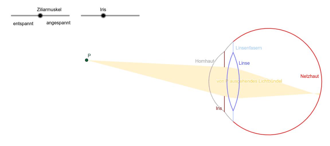 Das menschliche Auge Drücke die Eingabetaste um die Aktivität zu starten