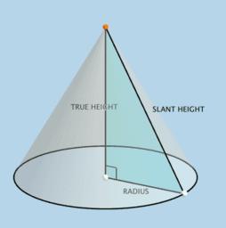 Cone Anatomy