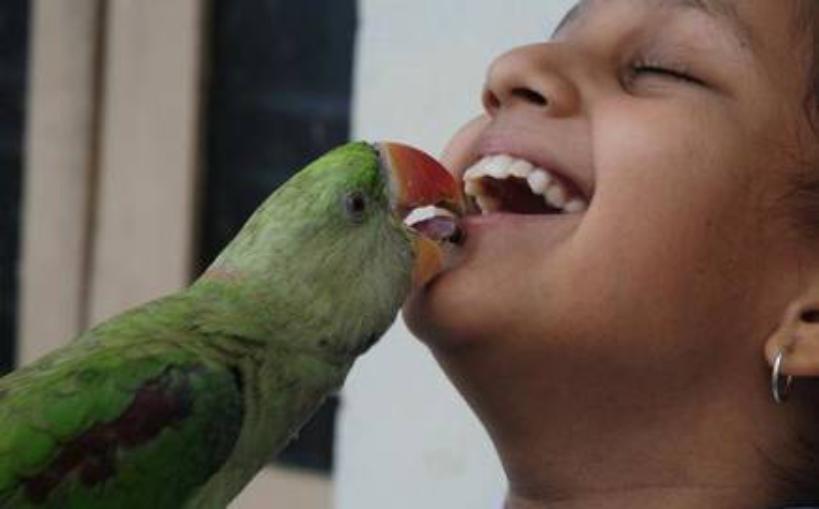 How do you foil the parrot beak?
