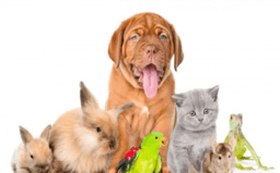 Rund um Haustiere 3