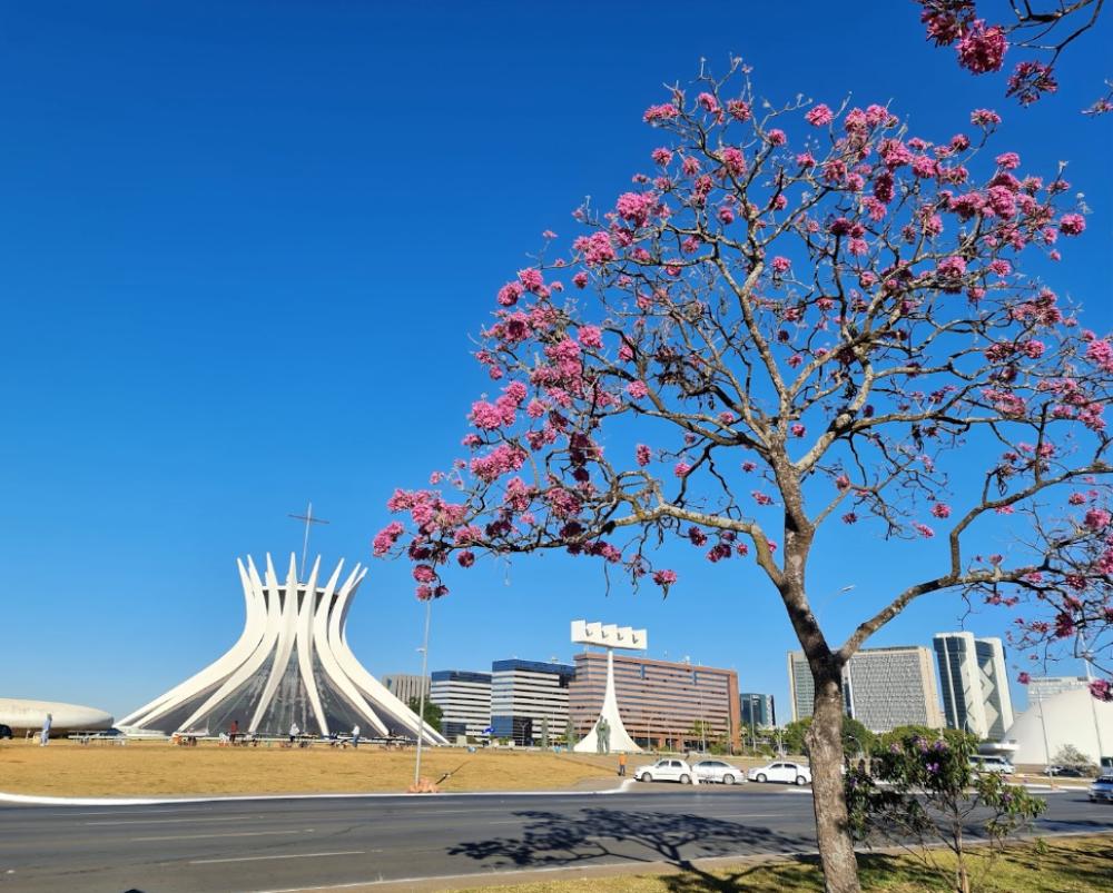 Brasilia's Catedral - Oscar Niemeyer  Foto de Olexiy Shynkarenko