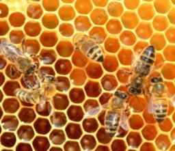 de meetkunde van bijen
